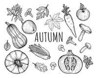 秋天季节性菜单水果和蔬菜 库存图片