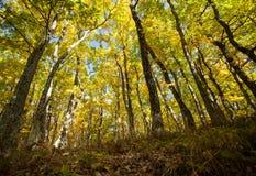 秋天季节的不可思议的森林 免版税库存图片