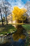 秋天季节的北海道大学 免版税库存图片