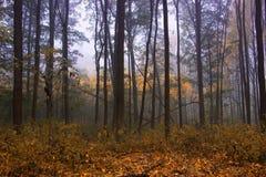秋天季节的有雾的森林 免版税库存照片