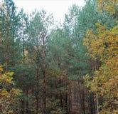 秋天季节的森林 图库摄影