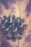 秋天季节-在一片干燥红槭叶子的杉木锥体,葡萄酒样式 免版税库存照片