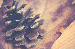 秋天季节-在干燥红槭叶子和木头背景,葡萄酒样式的杉木锥体 库存图片