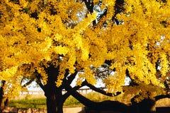 秋天季节11月中旬在日本 免版税库存图片