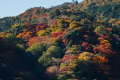 秋天季节11月中旬在日本 免版税库存照片