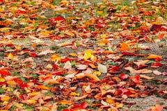 秋天季节11月中旬在日本 免版税图库摄影