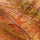 秋天安心装饰了与叶子的自然本底在枝杈之间 免版税库存照片
