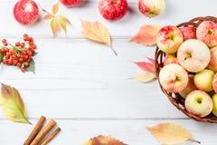 秋天完全失败位置构成用成熟红色苹果,黄色叶子,桂香 图库摄影