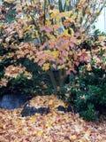 秋天完美 库存图片