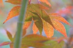 秋天密林的传说 库存照片