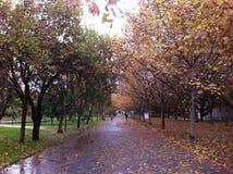 秋天对比 库存照片