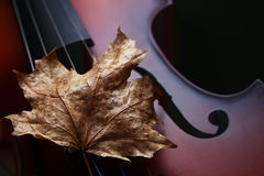 秋天小提琴 免版税库存图片