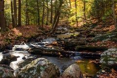 秋天小河在恩德斯状态森林 免版税图库摄影