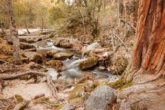 秋天小河在森林里 免版税库存照片