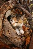 秋天小猫 库存照片