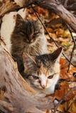 秋天小猫 免版税图库摄影