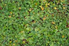 秋天小的植物灌木背景纹理样式 免版税库存照片