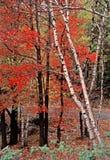 秋天山公园肋骨状态森林 免版税图库摄影