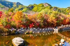 秋天山和森林风景 库存照片