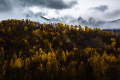 秋天山坡 库存图片