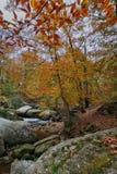 秋天山小河风景视图 秋天的蓝岭山脉 库存照片