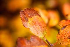 秋天山毛榉叶子装饰美好的自然bokeh背景 免版税库存照片