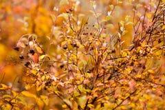 秋天山毛榉叶子装饰美好的自然bokeh背景 图库摄影