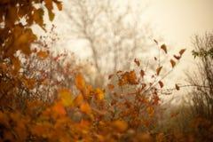 秋天山毛榉叶子装饰美好的自然bokeh背景 免版税库存图片