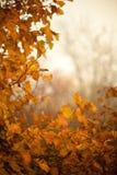 秋天山毛榉叶子装饰美好的自然bokeh背景 库存照片