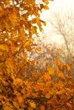 秋天山毛榉叶子装饰美好的自然bokeh背景 免版税图库摄影
