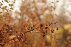 秋天山毛榉叶子装饰美好的自然bokeh背景 库存图片