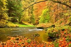 秋天山河 被弄脏的波浪,新鲜的绿色生苔石头和冰砾在用五颜六色的叶子盖的河岸从老t 免版税库存照片
