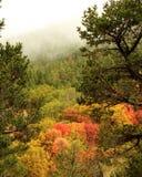 秋天峡谷上色有雾 免版税库存图片