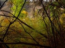 秋天峡谷拼贴画 库存图片