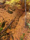 秋天峡谷风景伊利诺伊 图库摄影