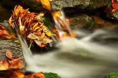 秋天巨型山流 库存图片