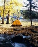 秋天帐篷结构树 免版税库存图片