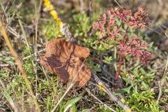 秋天干燥叶子在森林 免版税库存图片