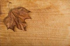 秋天干燥叶子槭树 免版税库存照片