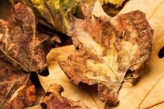 秋天干燥叶子纹理 库存照片