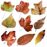 秋天干燥叶子设置了II 免版税库存图片