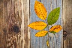秋天干燥叶子,顶视图图象 免版税库存图片