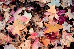 秋天干燥叶子-背景 免版税库存照片