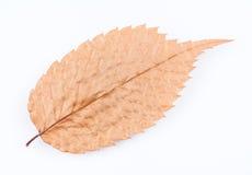 秋天干燥叶子 库存图片