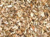 秋天干燥枫叶无缝的样式 留下背景纹理 免版税图库摄影