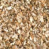 秋天干燥枫叶无缝的样式 留下背景纹理 免版税库存照片