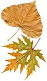 秋天干燥标本集 库存照片