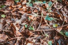 秋天干燥槭树和常春藤叶子纹理  库存照片