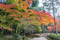 秋天庭院和森林Daigoji寺庙的 日本京都 库存照片