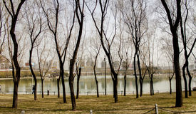 秋天庭院和湖 库存照片